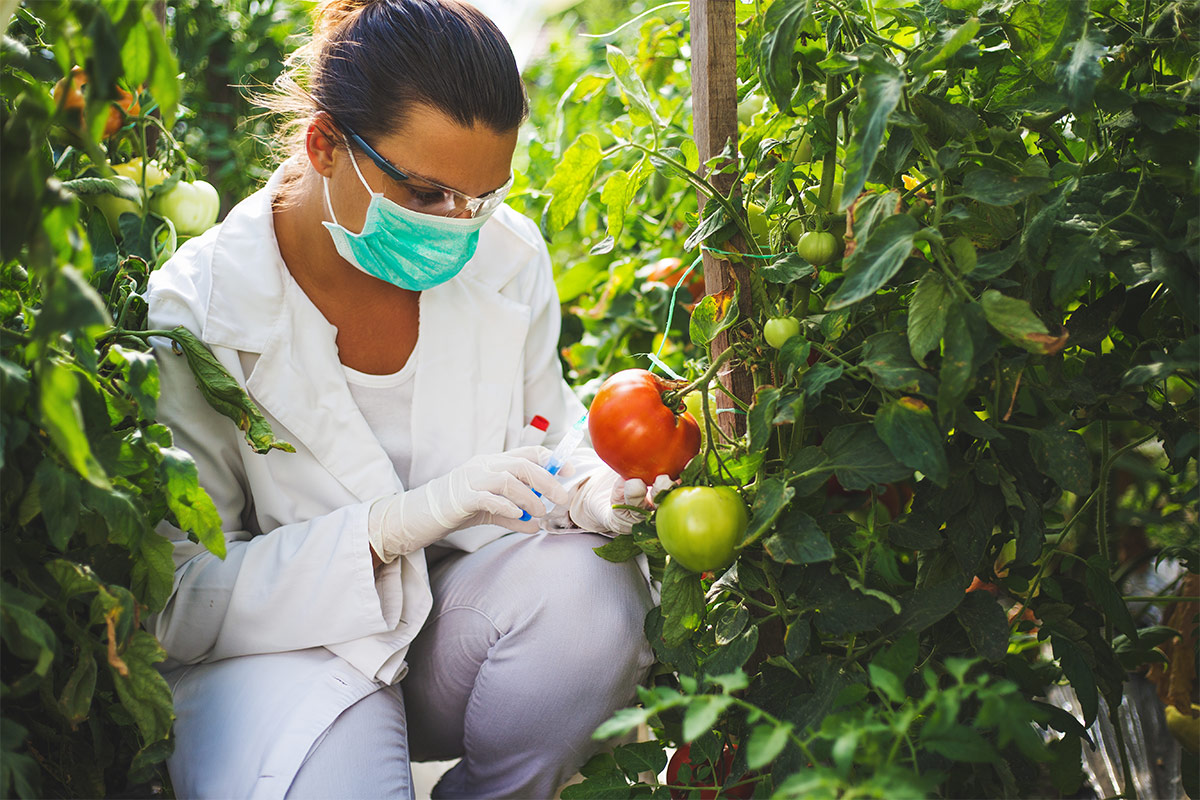 Woman inspecting plants