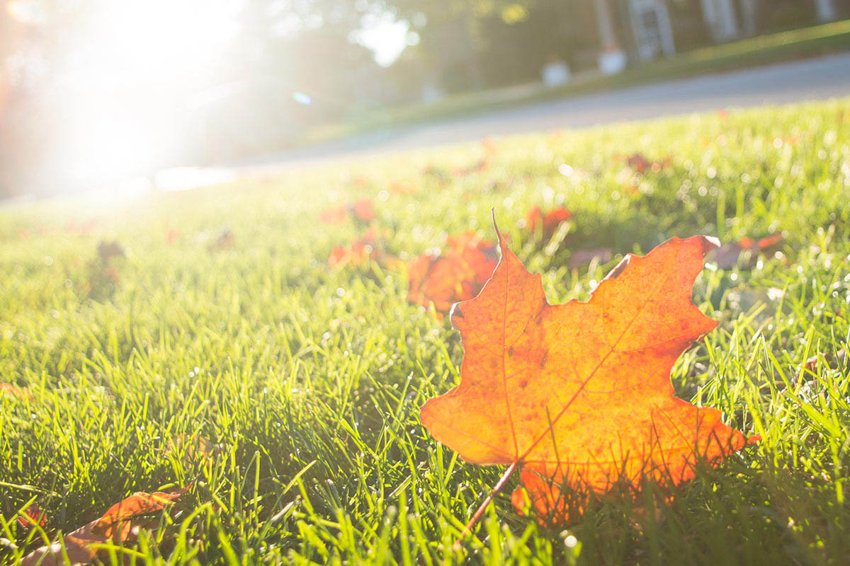 fall leaf on grass