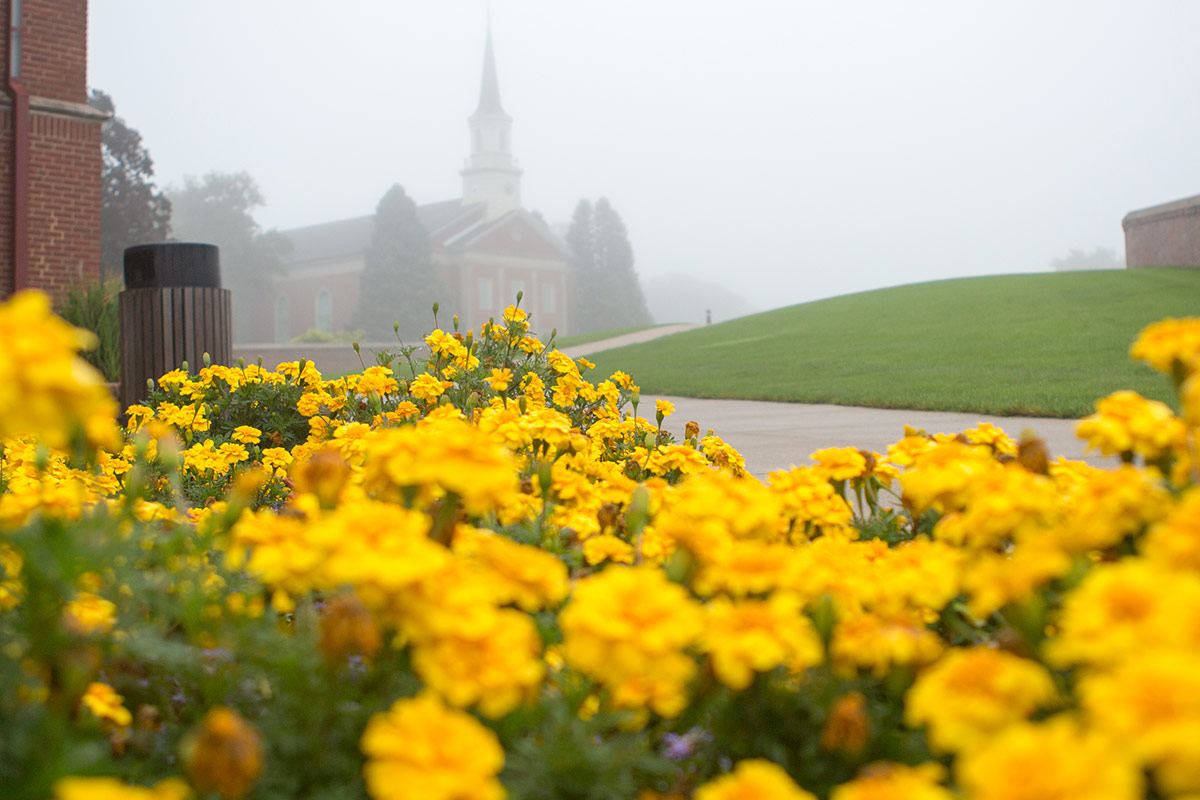 foggy spring on campus