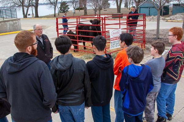 Students observe a cow